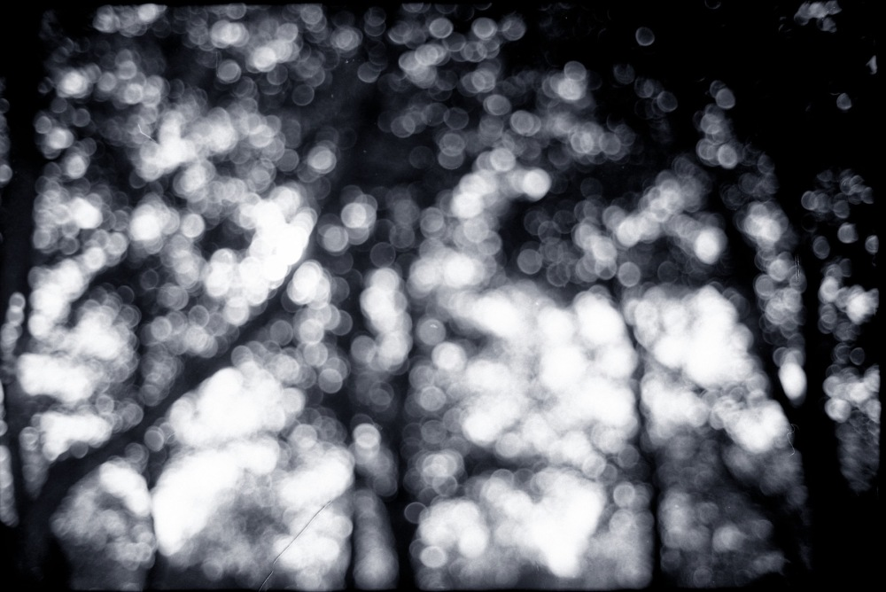 Leica Summicron C 40mm f2 bokeh