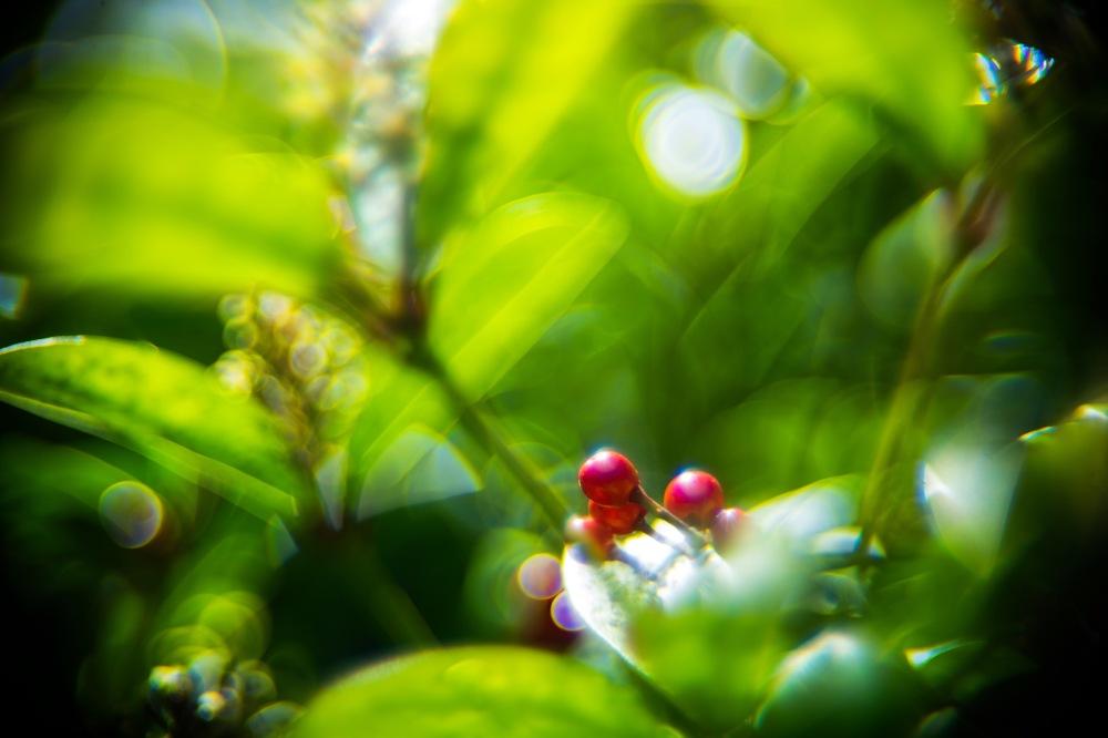 Canon 50mm f0.75 XI lens macro shot