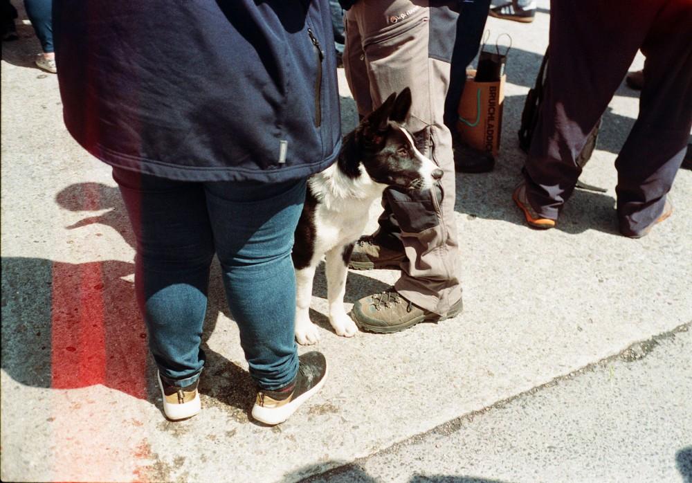 Islay dog